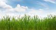 canvas print picture - Gras Getreide Feld Wurzeln Boden