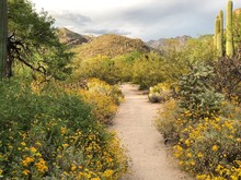 Southwest Arizona Hiking Trail...