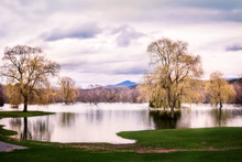 Tree Reflection, Flooded Golf ...