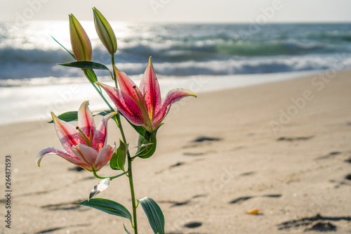 Fotografija Stargazer Lily near the ocean with waves on the sandy beach 1