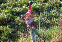 Garden Gnome In The Garden.