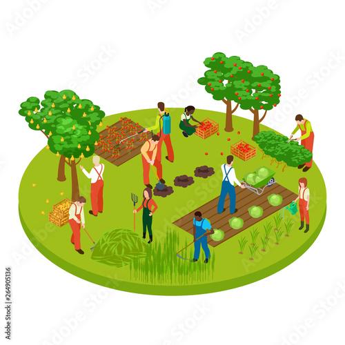 Fotografija Gardening workers, fruit tree and plants isometric vector illustration