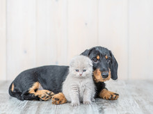 Cute Baby Kitten Sitting With Dachshund Puppy On The Floor At Home At Looking At Camera