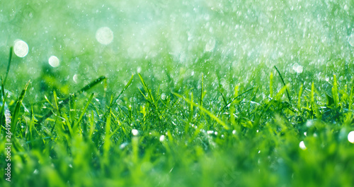 Obraz Grass with rain drops. Watering lawn. Fresh green spring grass with dew drops closeup. Soft focus. Abstract nature spring background - fototapety do salonu