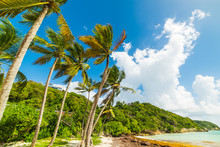 Palms By The Sea Pointe De La ...