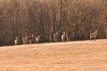 Buckskin Colored Camouflage Colors Like Forest After Winter