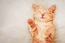 Ginger Kitten Raised His Paw Up In A Dream. The Concept Of Choice And Voting.