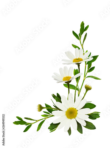 Papiers peints Fleur Daisy flowers and green grass in a corner floral arrangement
