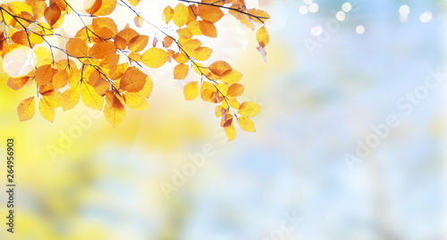 Obraz Vibrant fall foliage - fototapety do salonu