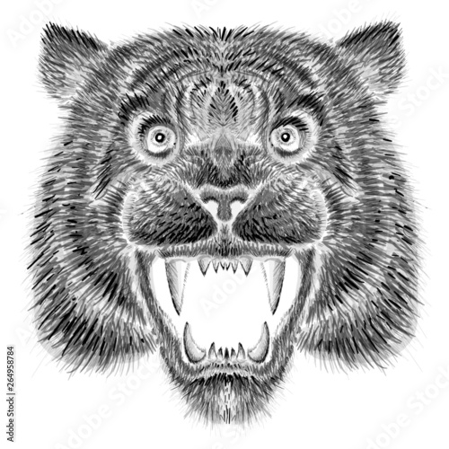 Poster Croquis dessinés à la main des animaux The Vector logo tiger for tattoo or T-shirt design or outwear. Hunting style tigers print on black background.