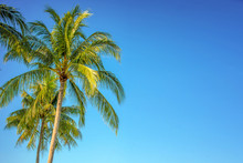 Palm Tree On Blue Sky Background With Copy Space