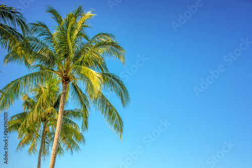 Poster Palmier Palm tree on blue sky background with copy space