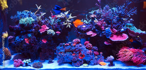 Foto op Canvas Koraalriffen Corals in a Marine Aquarium.