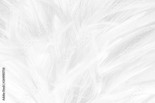 Foto op Aluminium Pauw Beautiful macro white feather pattern texture background