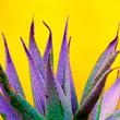 canvas print picture Minimal fashion plants  design. Aloe. Colorfull trend. Canary Island