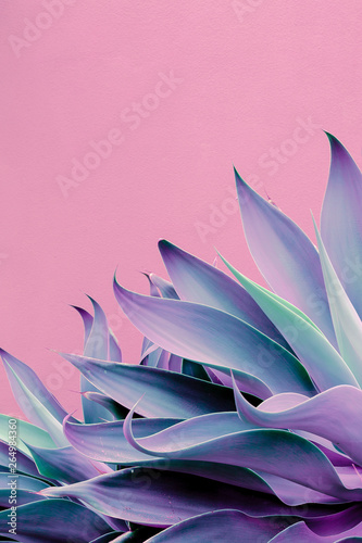 Poster Canary Islands Fashion plants on pink design. Aloe. Canary Island Nature