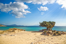 Lonely Tree On A Greek Beach