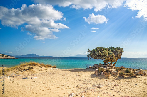 Fotoposter Olijfboom lonely tree on a greek beach