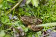 wild frog in nature