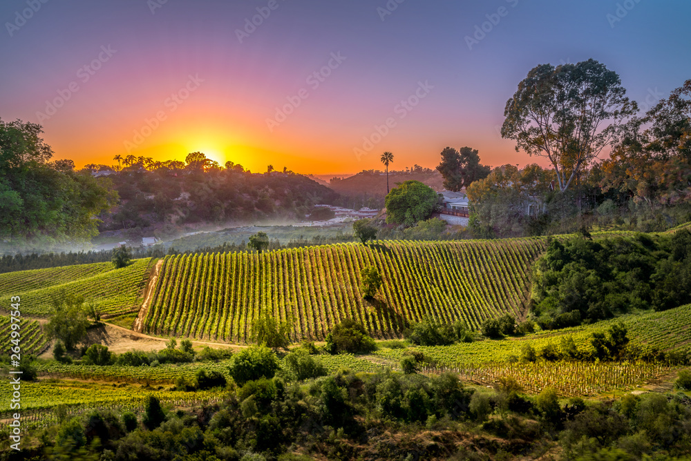 Fototapety, obrazy: sunset over vinery in Chile for agriculture or vinevard background