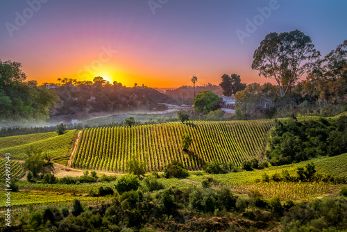 Poster Wijngaard sunset over vinery in Chile for agriculture or vinevard background