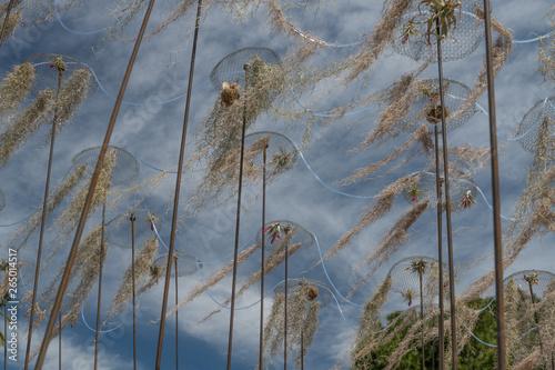 plantes dans les airs Canvas Print