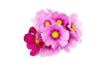 コスモスの花束