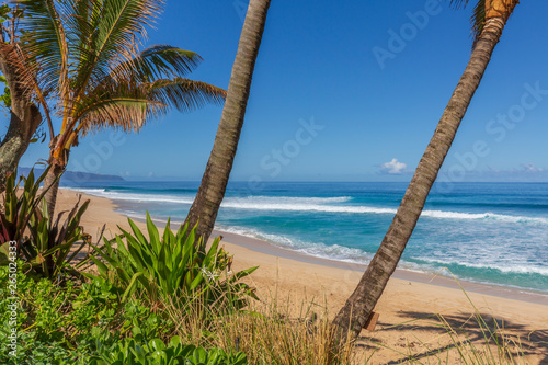 Palm trees on the beach in Hawaii
