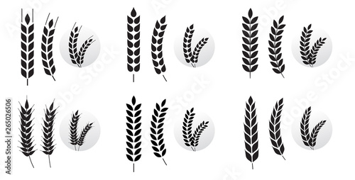 Photographie Wheat grains of different shapes set