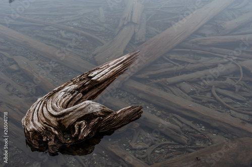 Valokuva  Gnarly Logs Sit Below Water Level