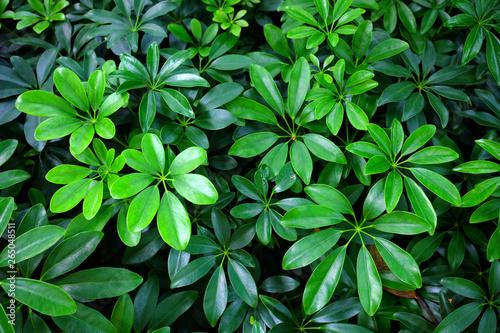 Foto auf Leinwand Baume Close up Green Bush Background.