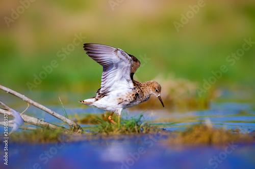 Платно Cute water birds