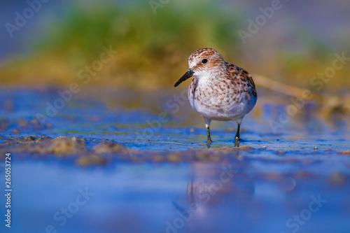фотография Cute water birds