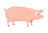 Fototapeta Fototapety na ścianę do pokoju dziecięcego - cartoon pig, vector