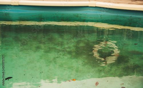 Neglected swimming pool with green algae Wallpaper Mural