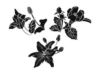 Set of doodle floral elements