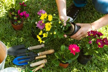 Manos de mujer con plantas y flores en el jardín