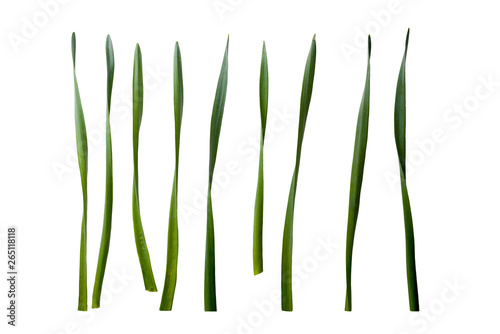 Papiers peints Narcisse Collection of Daffodil leaves isolated on a white background.