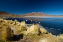 Laguna De Canapa With Flamingo...