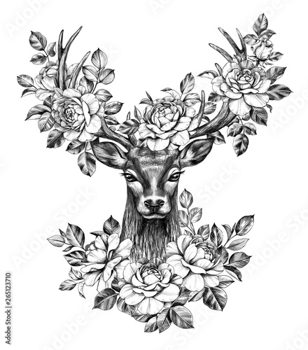 Deer Head with Roses Pencil Drawing - 265123710
