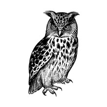Owl. Predatory Forest Bird. Sketch Hand Drawing. Black And White.