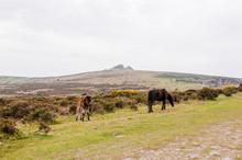 Dartmoor, Hound Tor, Heidelandschaft, Pferde, Devon, Frühling, Wanderweg, England