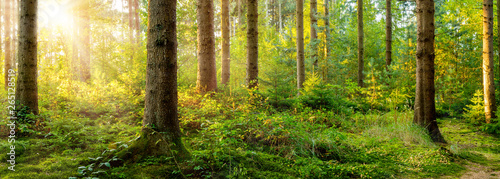 Beautiful forest in spring with bright sun shining through the trees - 265128519