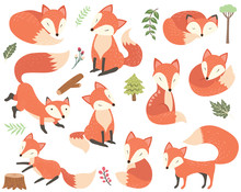 Woodland Animal Fox Elements