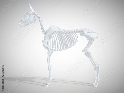 Carta da parati 3d rendered medically accurate illustration of the horse skeletal system