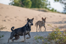 Two Dogs In The Sand Desert