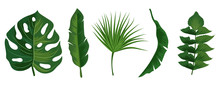 Tropical Exotic Leaves Vector Isolated On White Background. Illustration Of Summer Leaf Palm Collection