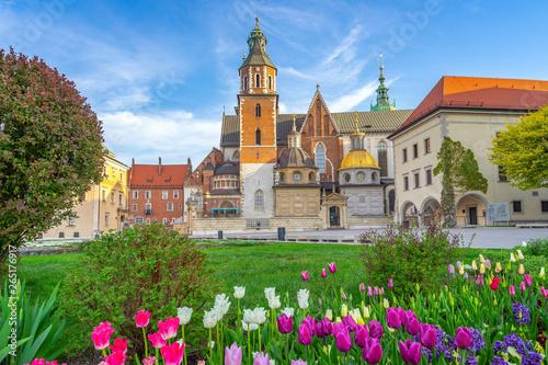 Obraz Kwitnące tulipany na dzieńcu Wawela, Kraków - fototapety do salonu