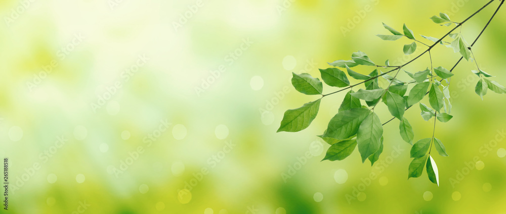 Fototapety, obrazy: Summer green leaves on a shiny background