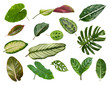 Variety of tropical leaves on white background